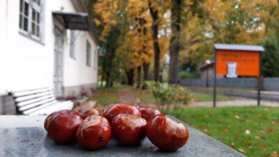 """7 ноября в 13.00 приглашаем на экскурсию по парку """"7 загадок Кадриорга"""""""